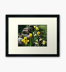 Tulips, Daffodils, and Stones, Front Yard in April Series 2009 Framed Print