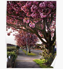 Suburban Spring Poster
