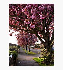Suburban Spring Photographic Print