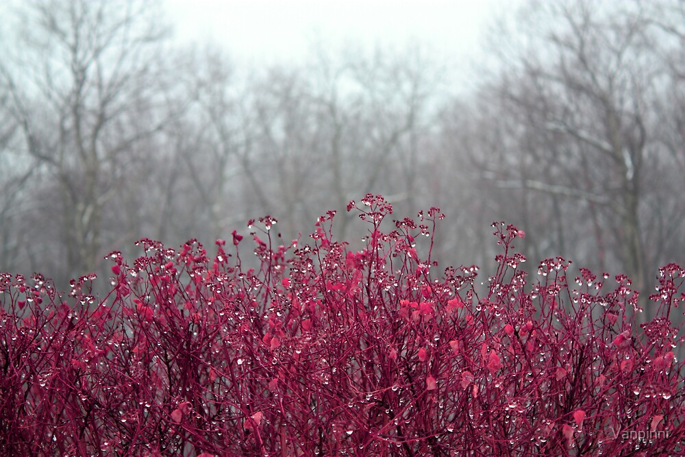 Bush, burning with color by Vanpinni