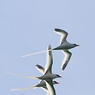 Longtail Trio by Lucy Hollis