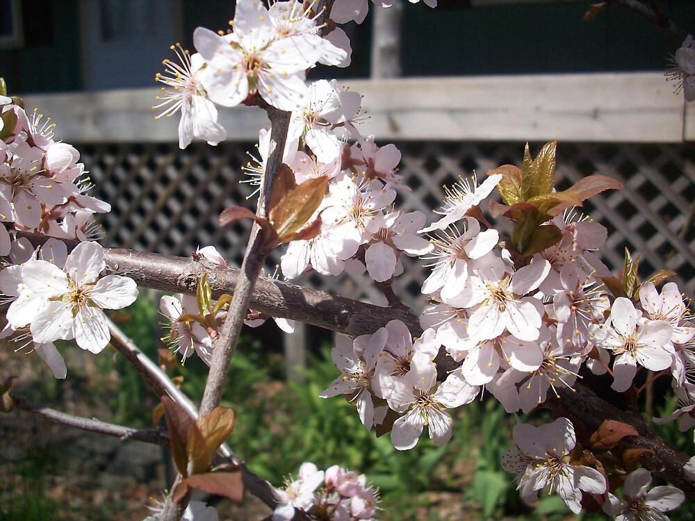 Lush Bloom by ripinamberlost
