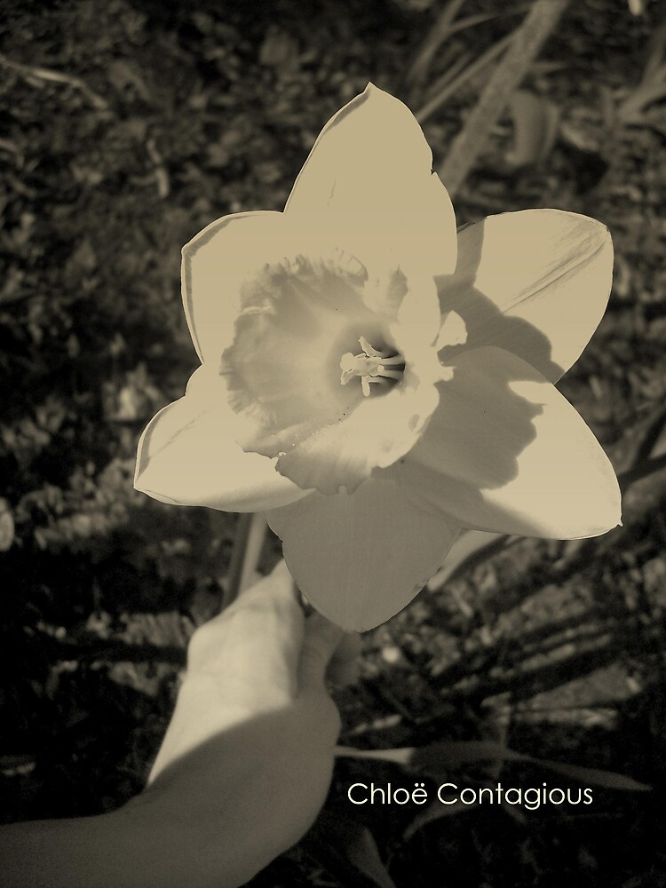 Meine Blume by ripinamberlost