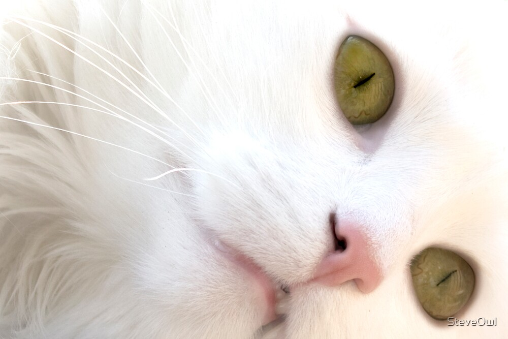 Cats Eyes by SteveOwl