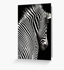 Zebra Black Background Greeting Card