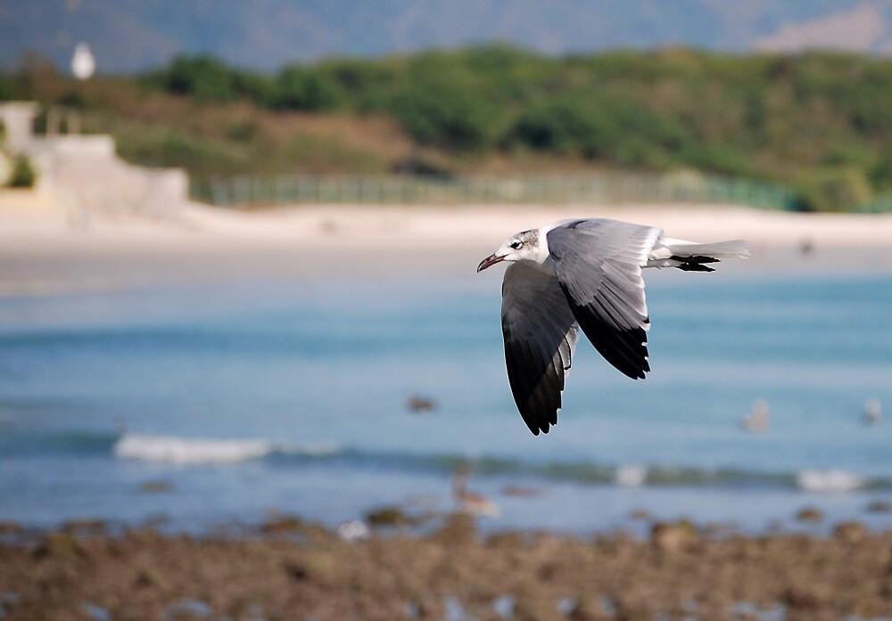 Coastal flyer by LjMaxx