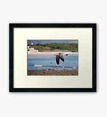 Coastal flyer Framed Print