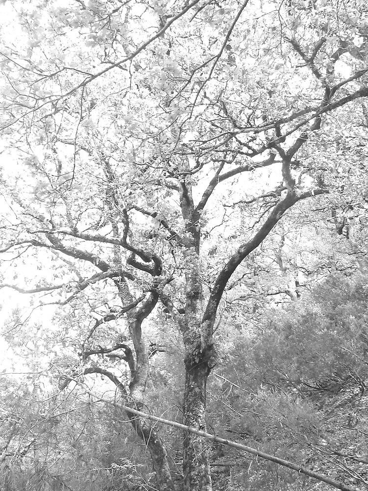 tree by blackben