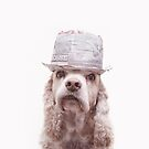 Cocker Spaniel in a Paper Trilby by puptrait