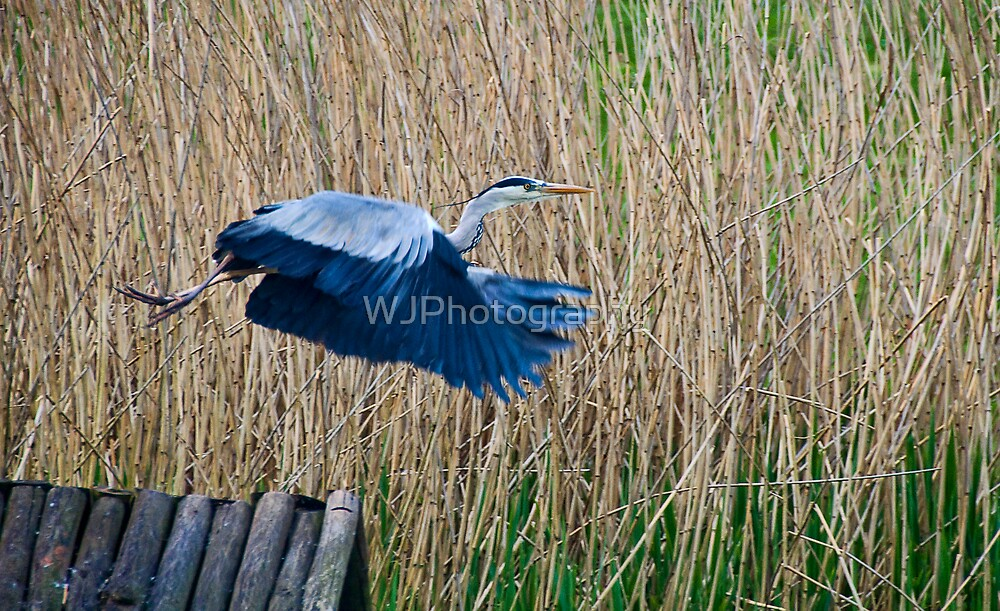 Taking Flight~ by WJPhotography