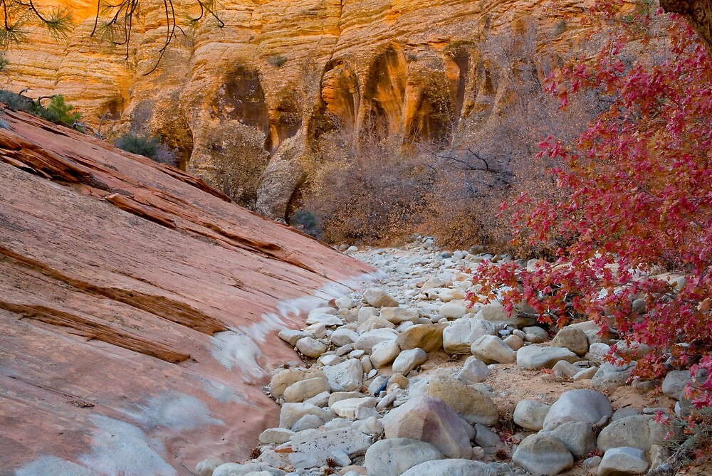 Fall in Zion by Bob Miller