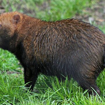 Bush Dog by Ladymoose