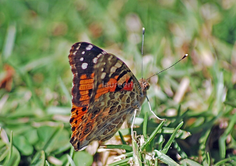 Resting on the grass blades by laureenr