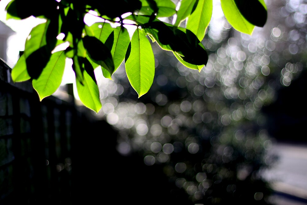 The fresh green of spring by photocillin