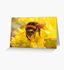 Bumble Bee #2 Greeting Card