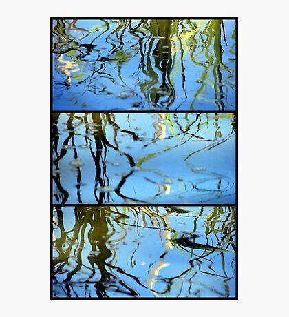 Pond Life - Triptych Photographic Print