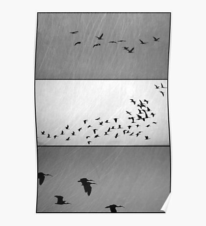 Ibis - Triptych Poster