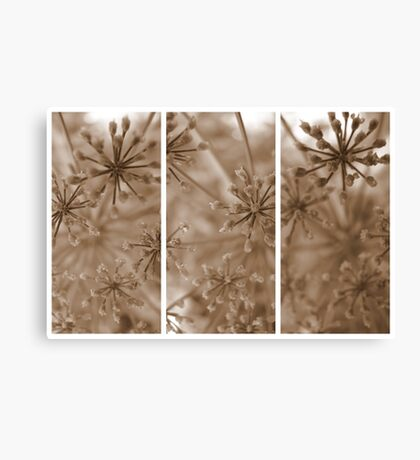 Parsley Heads - Triptych Canvas Print