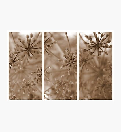 Parsley Heads - Triptych Photographic Print