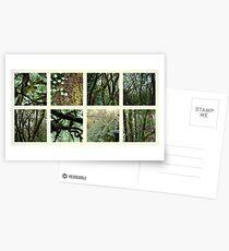 Alpine Rainforest Postcards