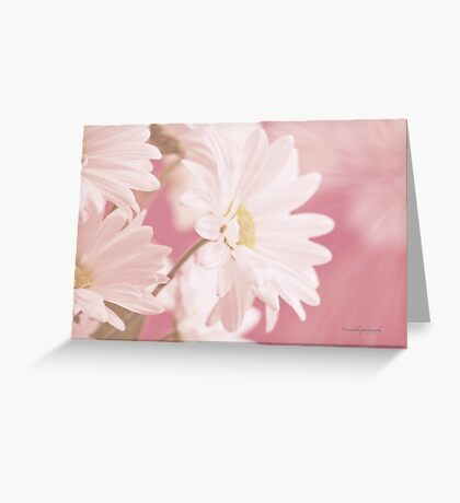 Daisies for Summer Greeting Card