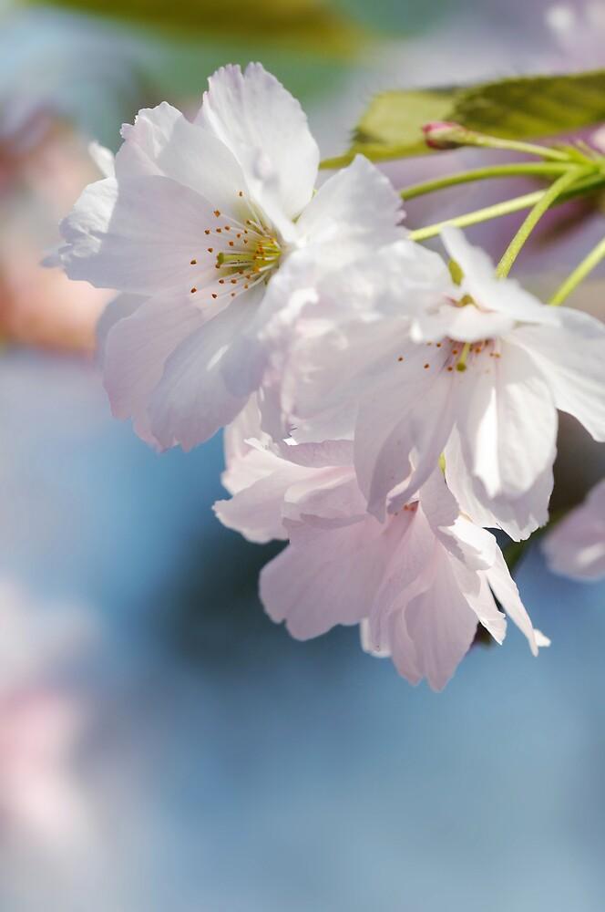 SOFT LIKE A FLOWER by mc27
