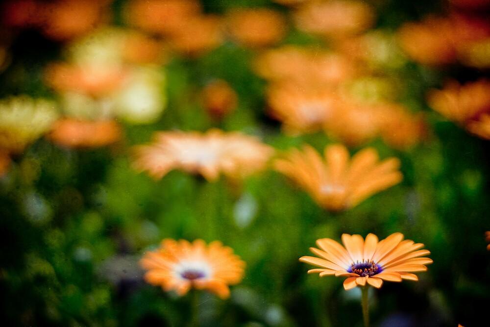Spring by jodyangel