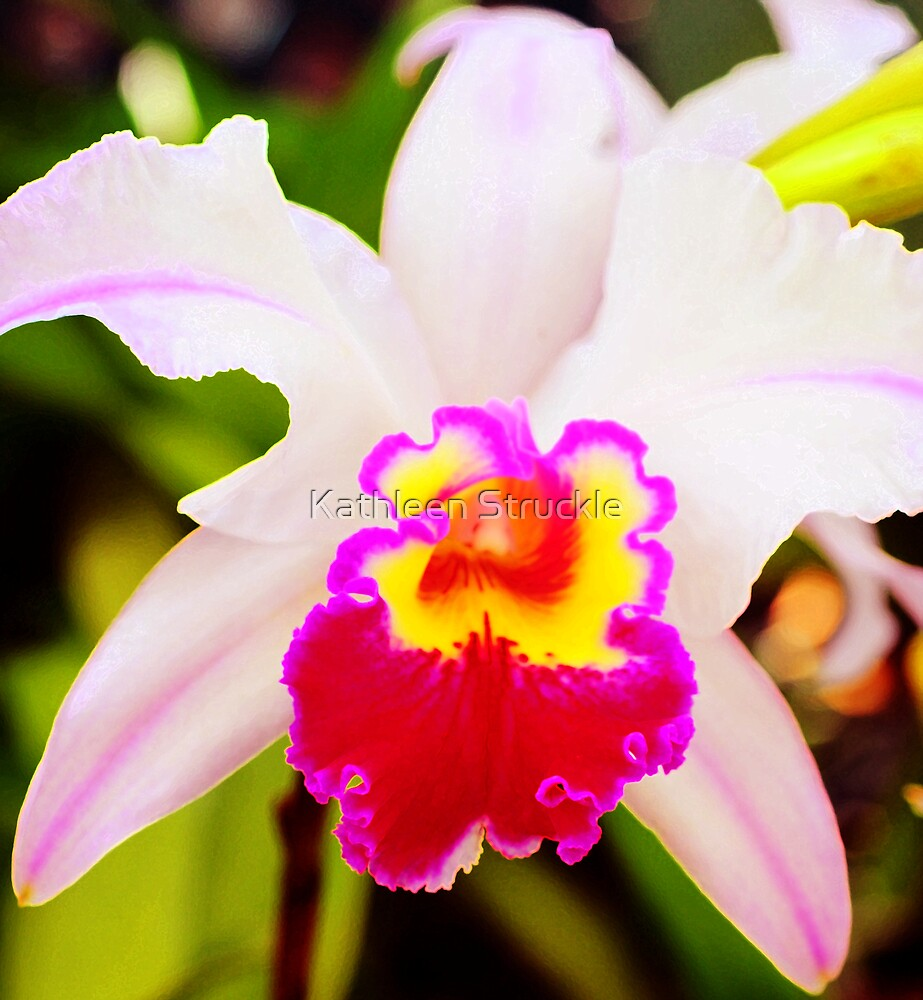 Lovely Orchid by Kathleen Struckle