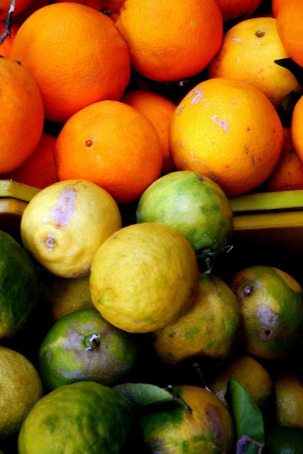 italian lime's and orange's by audreyaroha