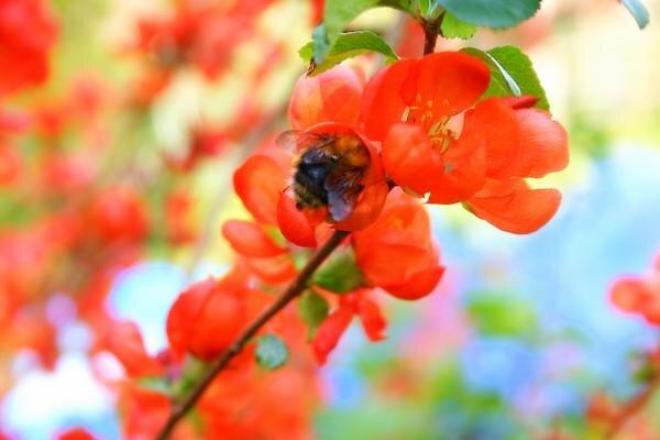 Cheeky Bee by audreyaroha