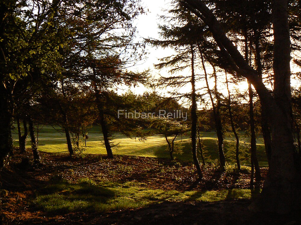 Early start among the trees by Finbarr Reilly