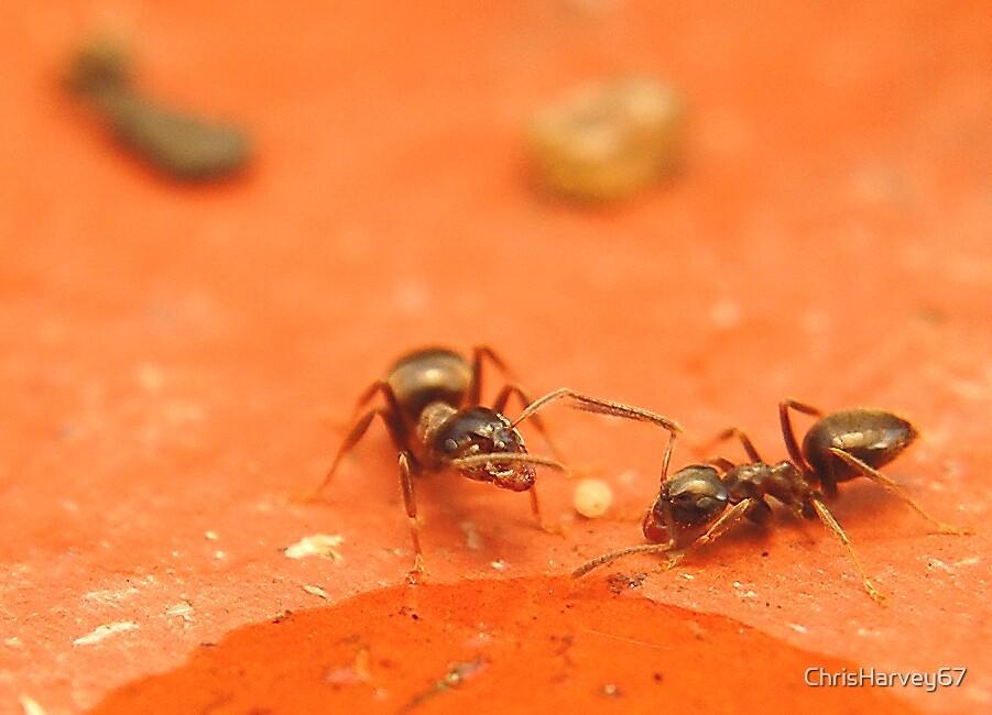 Thirsty Ants!! by ChrisHarvey67