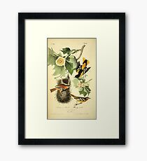 James Audubon Vector Rebuild - The Birds of America - From Drawings Made in the United States and Their Territories V 1-7 1840 - Baltimore Oriole or Hang Nest Framed Print
