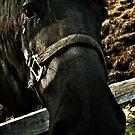 Booooooo I Am A Black Horse And You ?? by terrebo