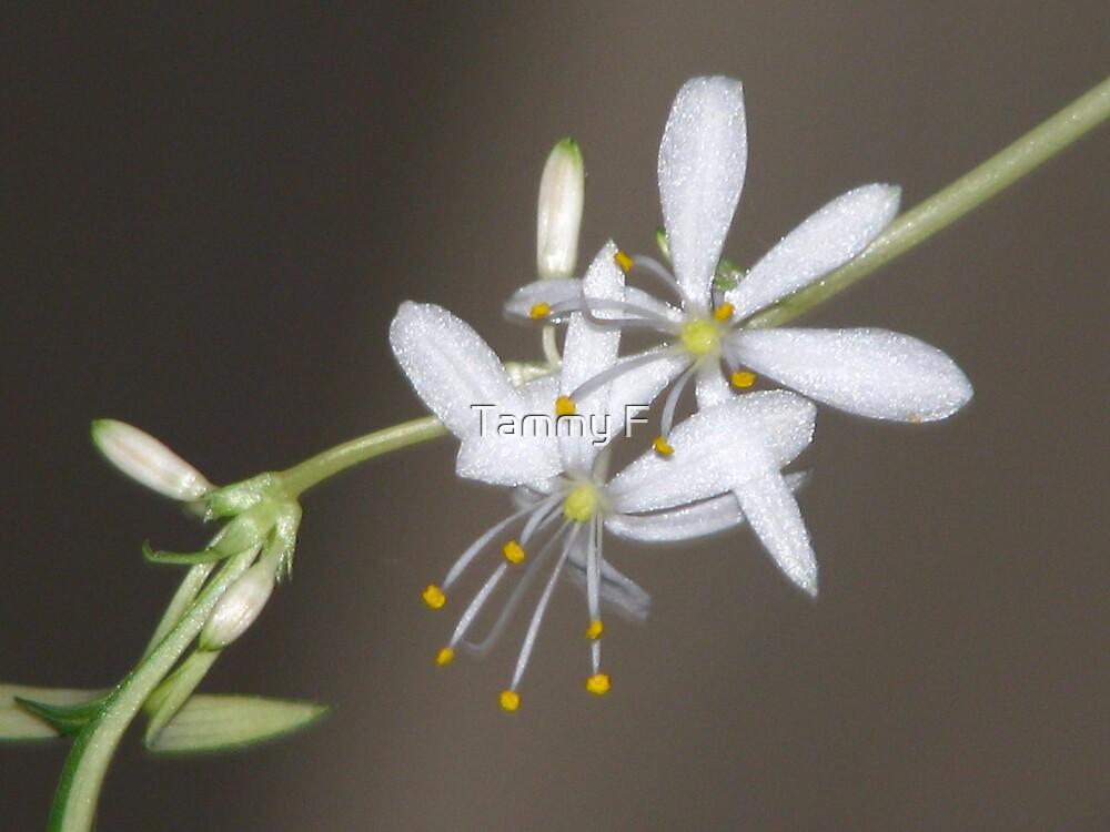 Spider Flower by Tammy F