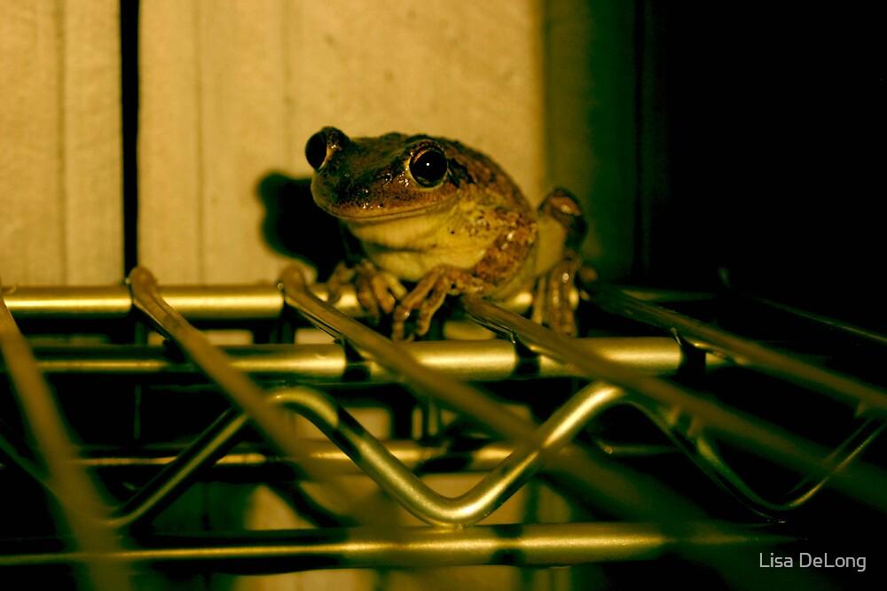 Green Frog by Lisa DeLong
