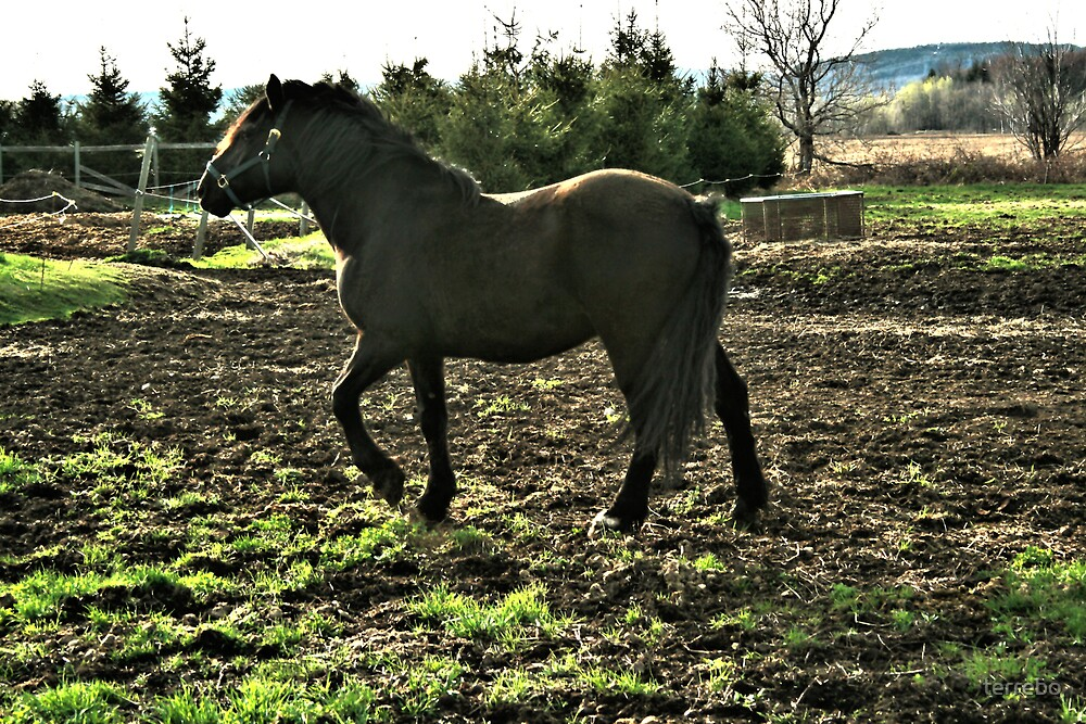 Horse In The Sun by terrebo