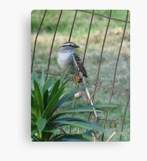 Little Bird On The Fence Metal Print