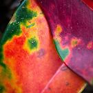 Nature Photography | Details and Textures of Leaves by Leonardo Ramos