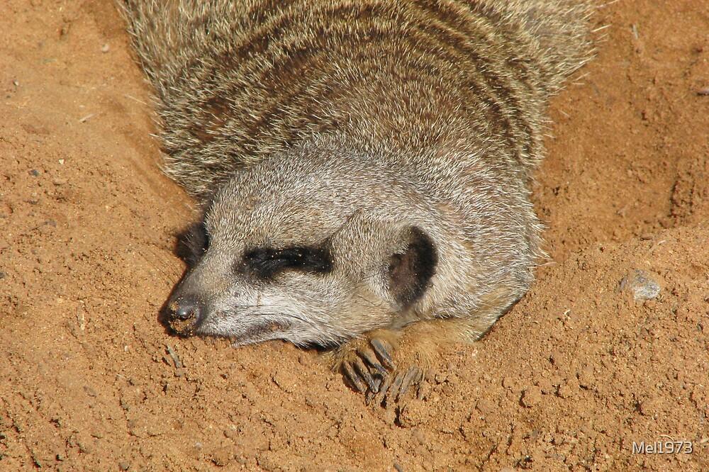 Meerkat, Monarto Zoo by Mel1973