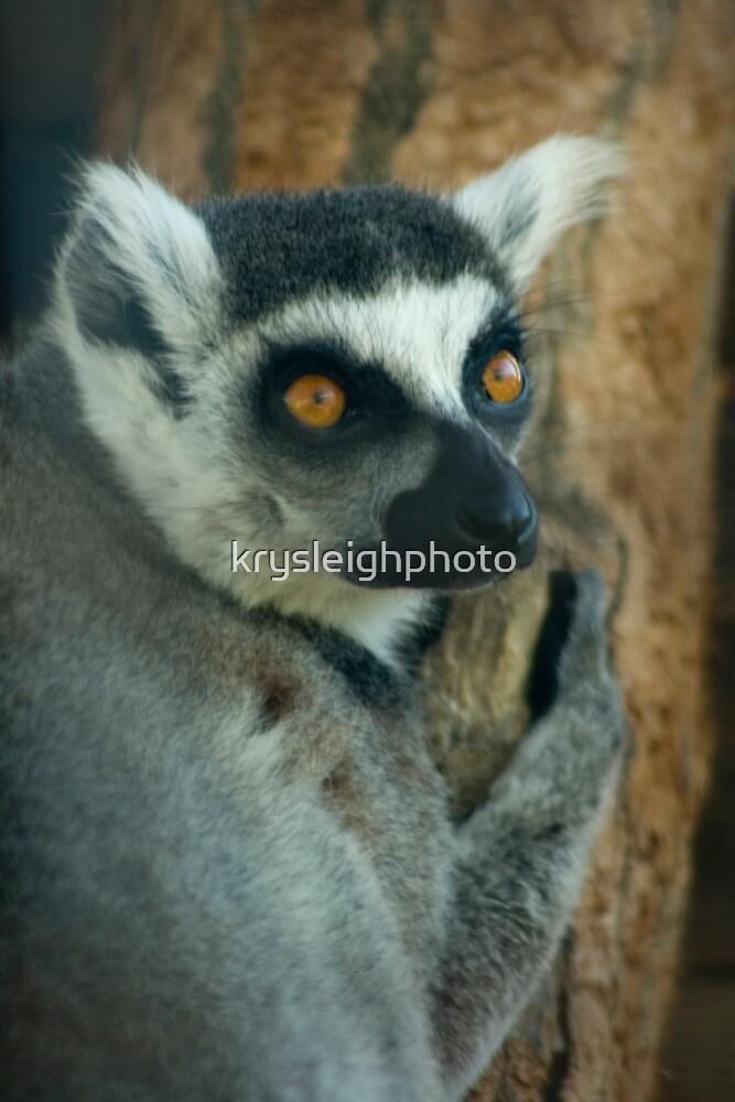 Lemur by krysleighphoto