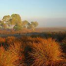 Early Morning Fog by GailD