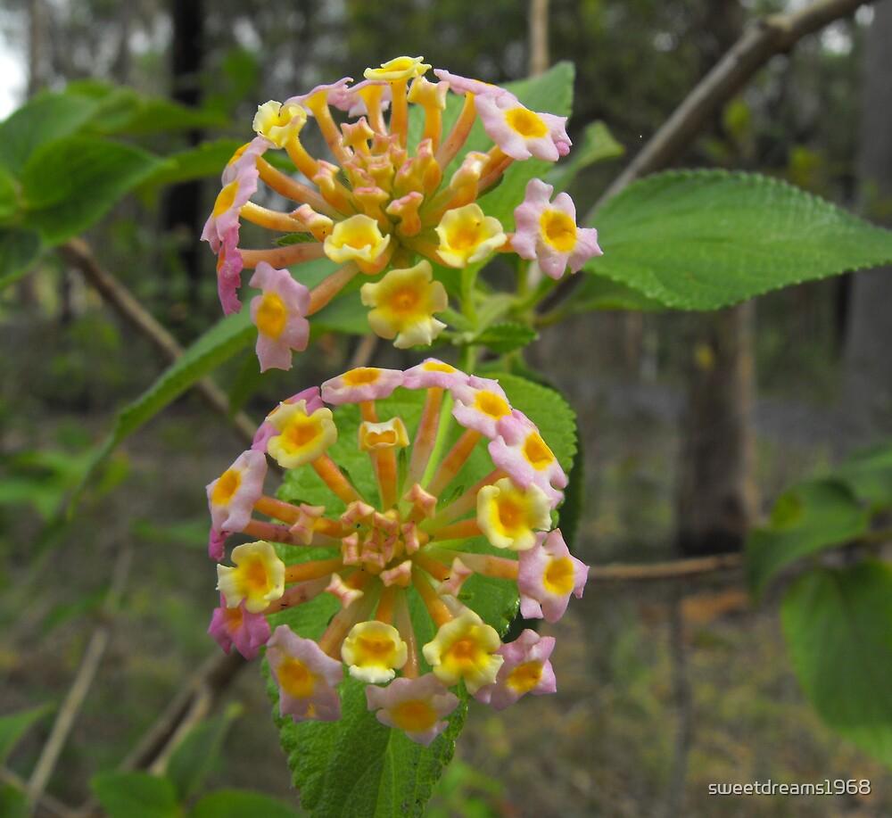 Wild Bush by Carol Field