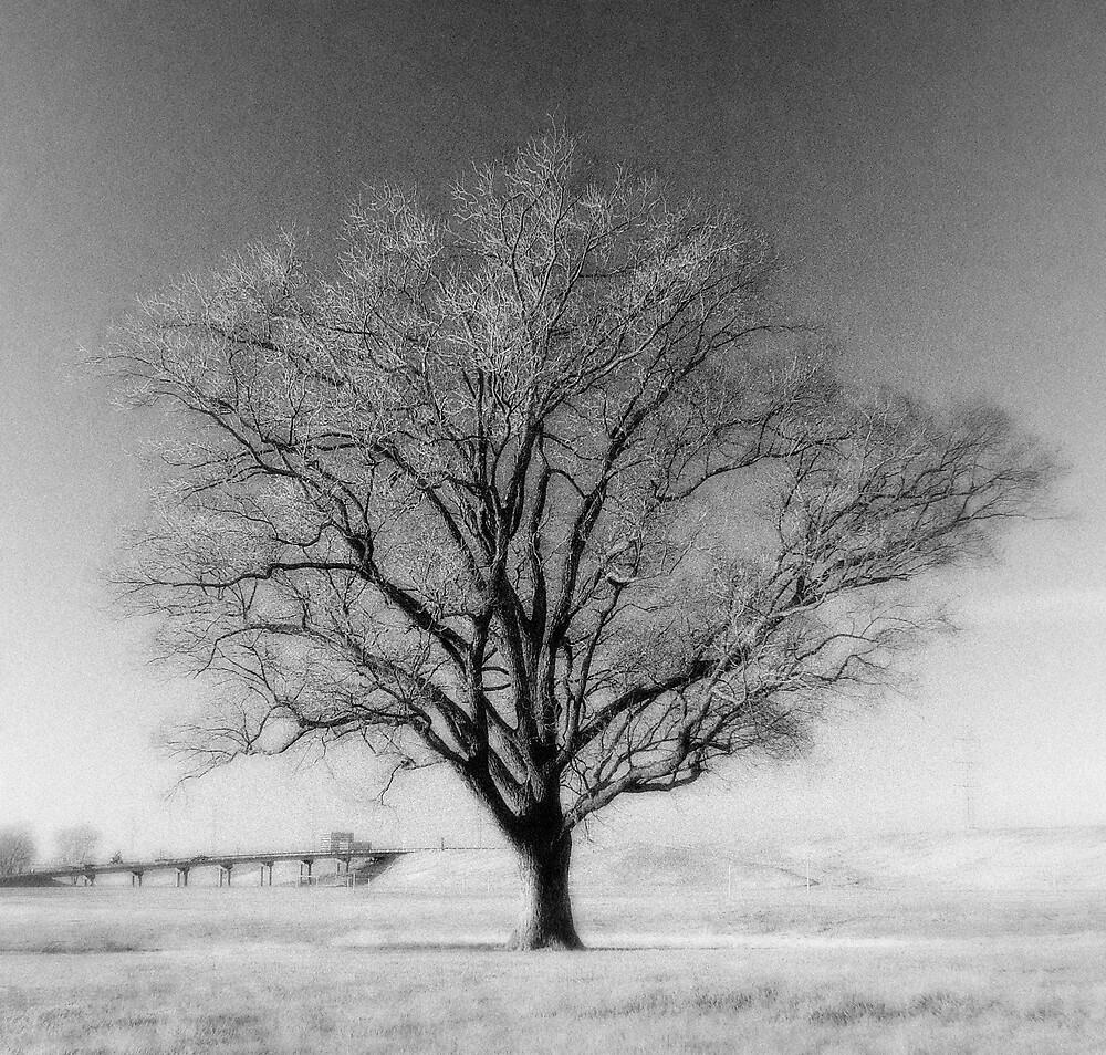 Majestic Tree by Carlos Restrepo