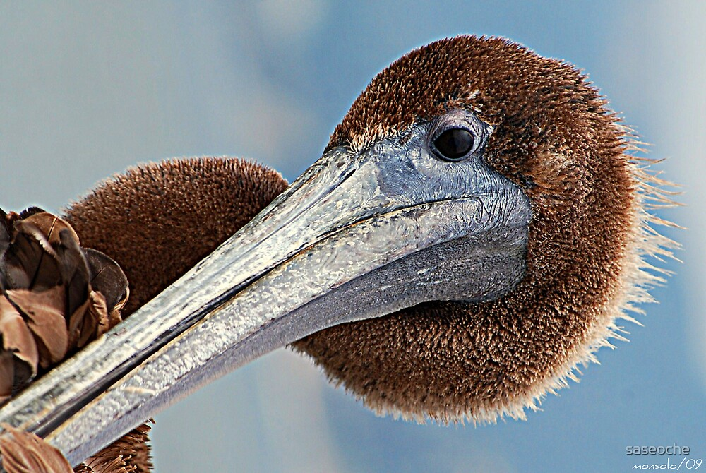 Pelican Head Portrait by saseoche