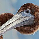 Pelican Head Portrait by saseoche
