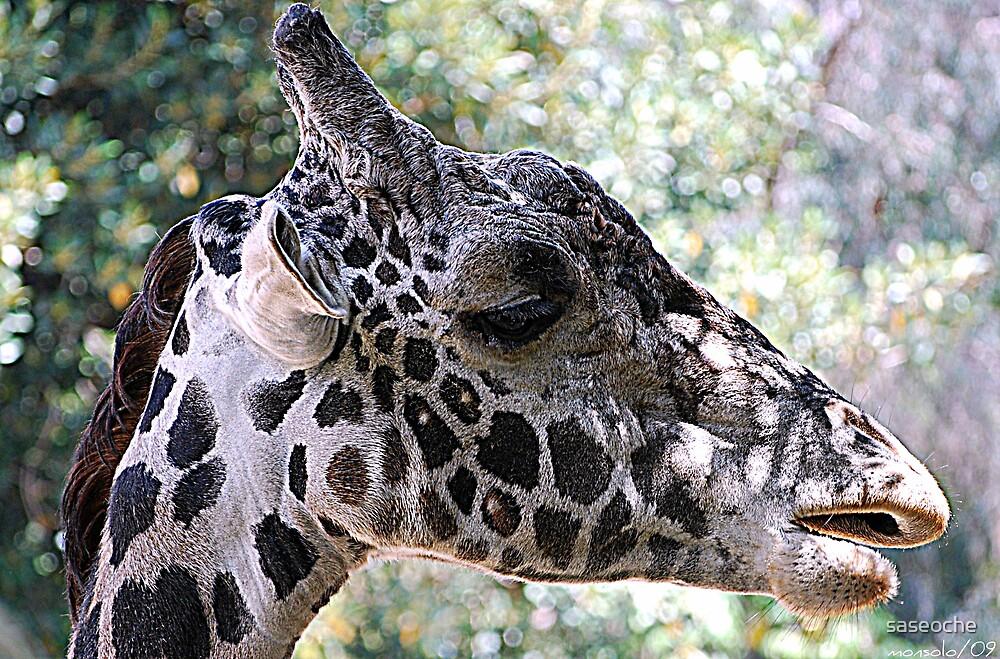 Giraffe Head Potrait by saseoche