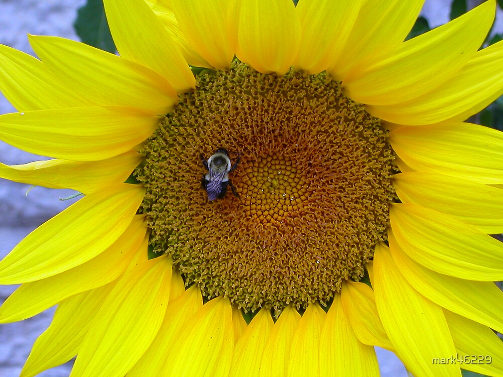 SUN FILLED DAY for a bee by mark46229