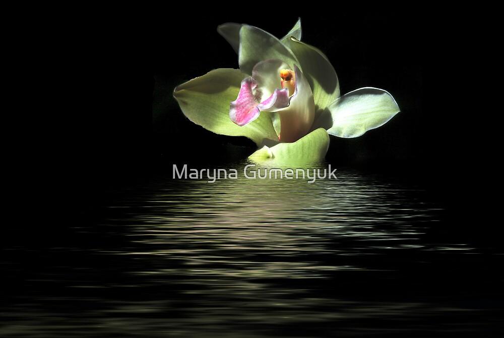 Orchid by Maryna Gumenyuk