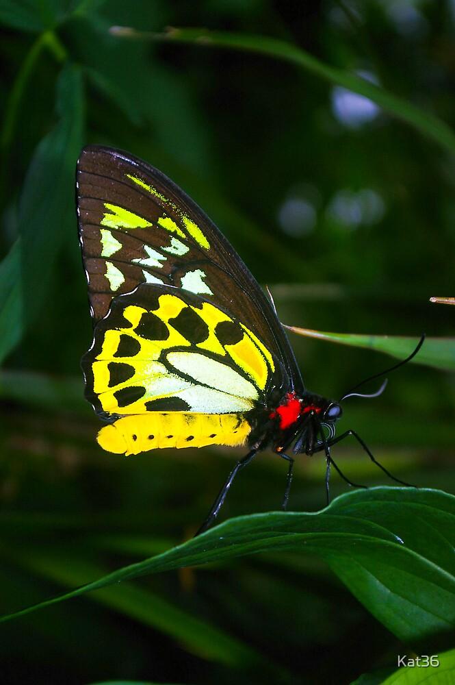 'Beautfiul Butterfly' by Kat36